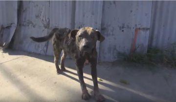 Невероятное перевоплощение умирающего пса!