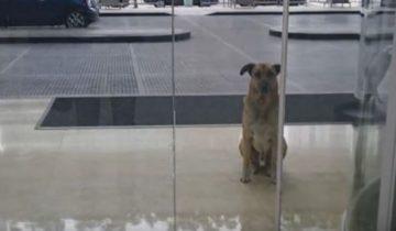 Пес долго ждал в аэропорту стюардессу, которая его приласкала