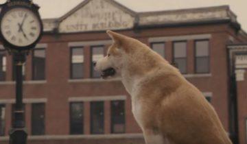 Самые преданные собаки в мире!