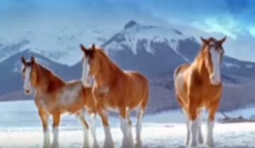 Весёлые лошади решили поиграть в снежки…