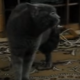 К хозяйке кота пришел новый друг