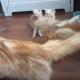 Кошка испугала своих котят!