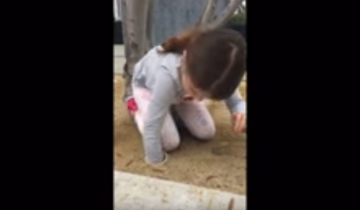6-летняя девочка спасла целое семейство уток!
