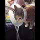 Кот в конусе придумал невероятный способ пить воду!