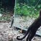 Вы будете в восторге от, как животные реагируют на собственное отражение