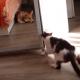 Кот хотел уединиться и закрылся в шкафу!