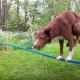 Я была удивлена, когда увидела, как балансирует эта собака!