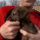 Трогательная история о щенке
