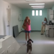 Эта собака начала ходить после 3-х месяцев паралича