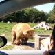 Женщина помахала медведю рукой