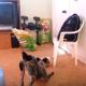 Забавный щенок отважно защищает свою миску!