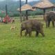 Этот слоненок отчаянно пытается подружиться с собакой