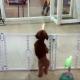 Я еще не видела, чтобы собаки так зажигательно танцевали сальсу!