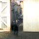 Я потеряла дар речи, когда увидела, кто не пускает собаку во двор!