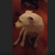 Хозяйка ругает пса за то, что он провинился