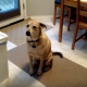 Собака с радостью ожидает ужина, но то, что происходит дальше, поражает!
