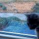 Мне стало не по себе, когда я увидел общение этих двух кошек!