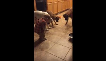 Она оставила ребенка с собаками всего на минуту