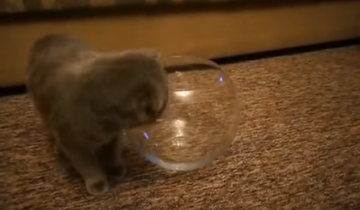 Котенок пытается залезть в аквариум!