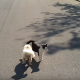 Этот щенок ослеп!