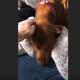 Собака очень обиделась, что хозяйка не взяла ее собой