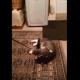 Это, пожалуй, самый изобретательный в мире кот.