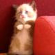 Уморительная нарезка из смешных котиков