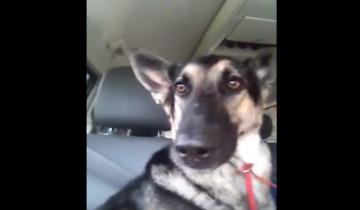 У этого пса непревзойденное чувство ритма!