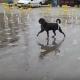 Эта собака — самое счастливое создание на Земле!