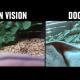 Хотите взглянуть на мир глазами животных? Тогда смотрите это видео!