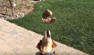 Все собаки умеют ловить еду. Но только не этот пес…