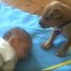 Ребенок уснул. Посмотрите, что делает его друг-пес!