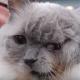 Это самый старый кот с двумя мордочками!