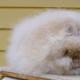 Самые пушистые ангорские кролики в мире!