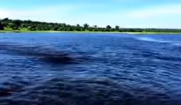 Бегемот гонятся за лодкой