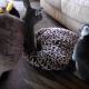 Нянька-лемур укладывает кенгуру спать