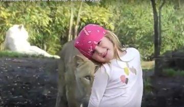Львица вплотную подошла к девочке и заглянула ей в душу!