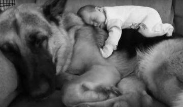 Маленькие детки со своими большими собаками!