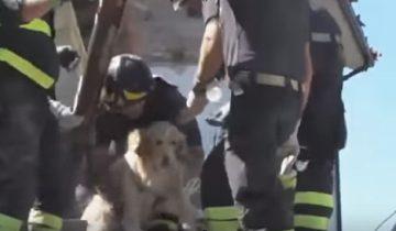 Цел и невредим: 9 дней пес провел под завалами после