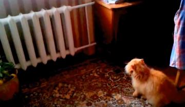 Кот ведет себя очень агрессивно. Кого же он увидел?
