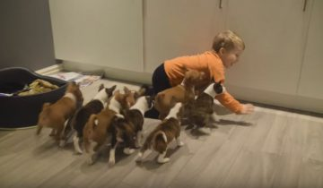 16 малышей под одной крышей!