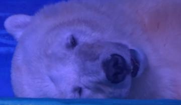Белый медведь стал частью развлечения в торговом центре