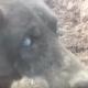 Этот слепой пес 30 дней сидел в колодце