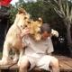 Невероятная нежность от грозных львов