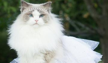 Великолепная кошка-принцесса Аврора, которая взорвала интернет
