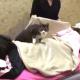 Кот работает массажистом в японском СПА-салоне