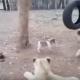 Этот щенок просто поразит вас своим поступком!