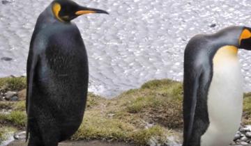 10 невероятных цветовых мутаций у животных!