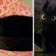 25 смешных котов, в которых вы без труда узнаете известных личностей!
