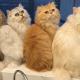 Кошачья королева и её питомцы взорвали соц сети